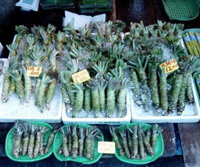 Radici di wasabi al mercato